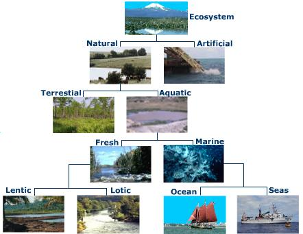 ecosystem-classification