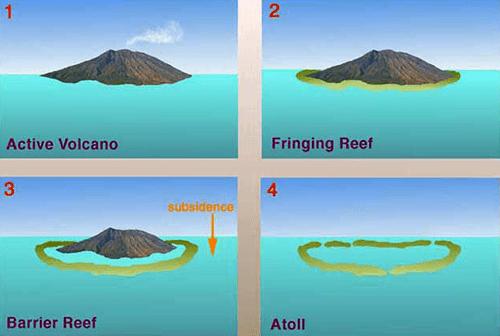 Coral-Reef-types