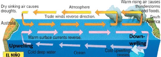 El Nino Circulations