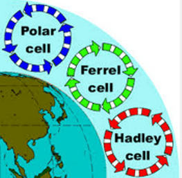 Polar cell, Ferrel cell, Hadley cell