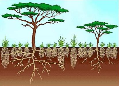 Savanna climate sudan type climate tropical grasslands savanna forests sciox Choice Image