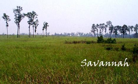 physical features of savanna grassland Grassland regions: savanna,  it retains nutrients in a form not immediately available to roots and acts as a physical barrier for new shoots growing from the.