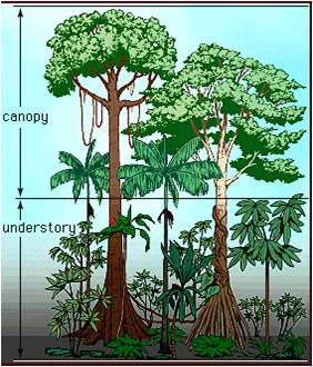 Tropical Monsoon Forests