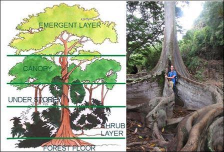 Vegetation in Equatorial Regions